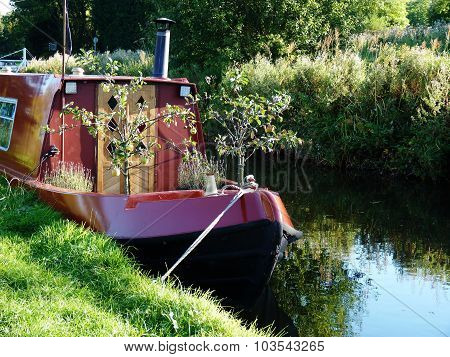 fruit tree on a barge canal river boat meadow