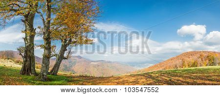 Llandscape With Golden Tree