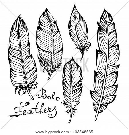 Hand drawn bird black feathers closeup isolated on white
