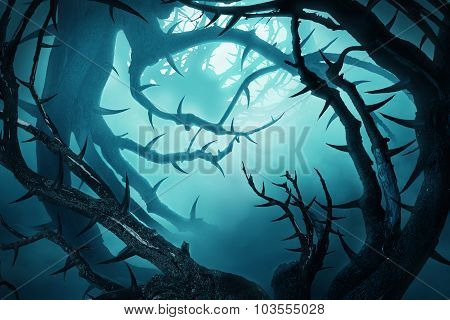 Dark Forest With Thorny Bushes In Green Fog