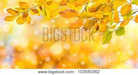 Nature Autumn Background