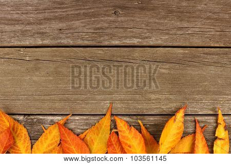 Bottom border of colorful autumn leaves on rustic wood