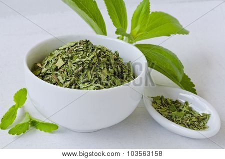 Stevia Fresh And Dried Leaves.