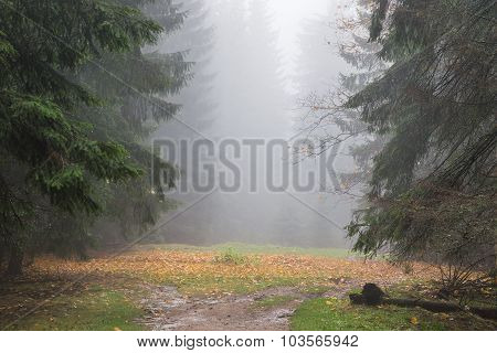 Fog In Rainy Forest