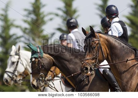 Close Up Of The Horse During Competition Matches Riding Round Obstacles