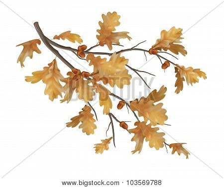 Vector autumn oak leaves branch