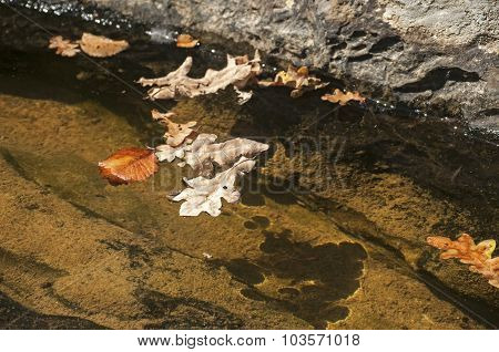 Fallen autumn leaves in puddle