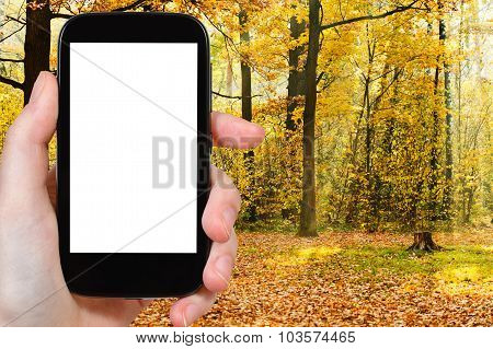 Smartphone And Sunbeams In Autumn Forest