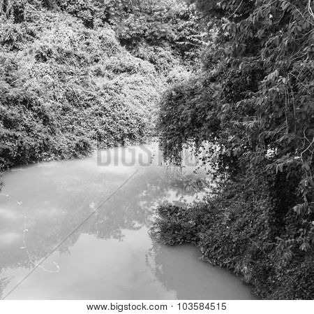 The Rivulet In The Jungle Black And White Background