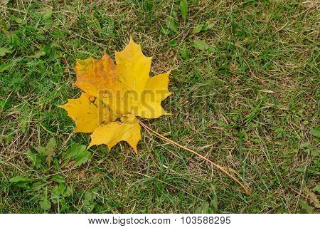 Yellow Leaf On The Grass