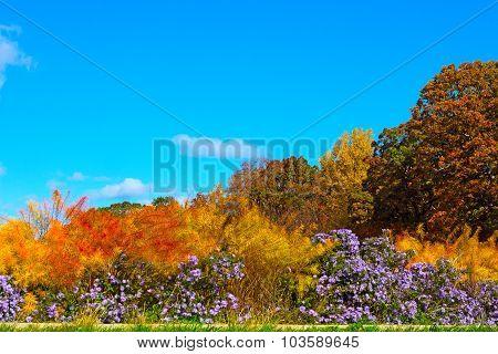 Vibrant autumn colors in National Arboretum Washington DC USA.