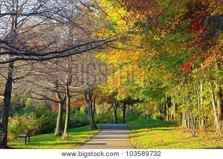 Park path walk during the autumn.