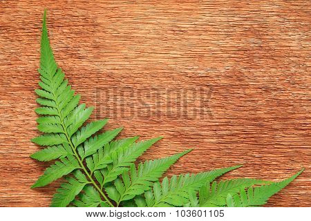 Close-up Of Fern On The Wooden Board