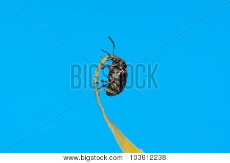 The Bug Sits On A Yellow Leaf