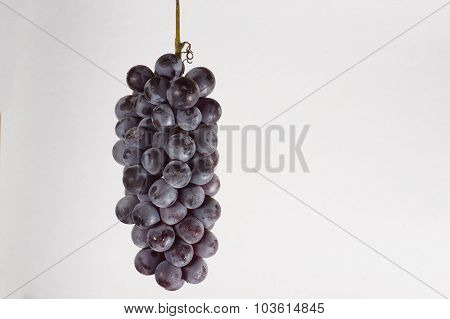 The  Cluster Of Grapes