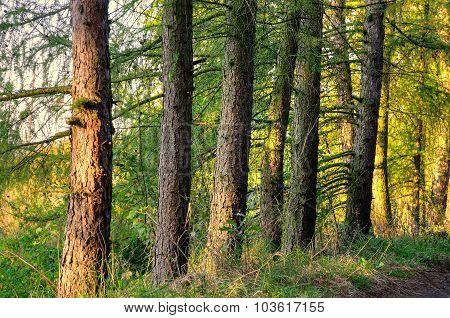 Forest autumn landscape.