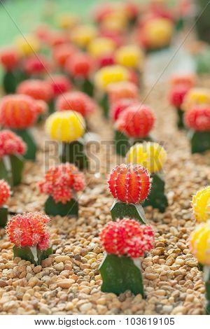 Small Cactus Plant