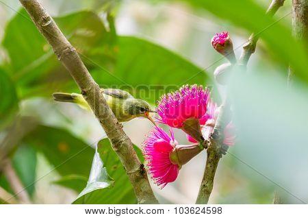 The Little Bird Eat The Nectar
