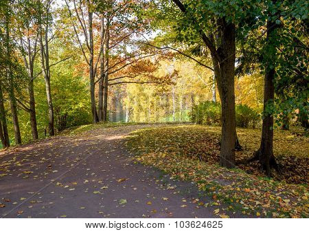 View  colorful park alley in autumn.