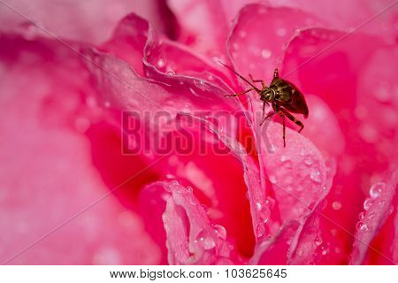 Bug In Pink World