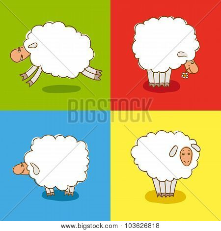 Four White Sheeps Isolated on colored background.