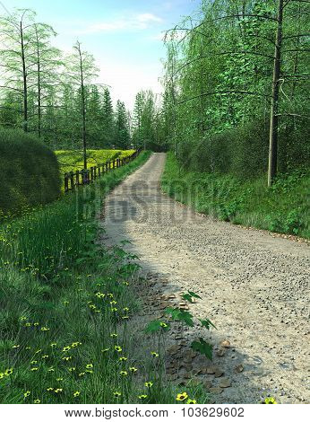 Hedgerow passes among road in summer time