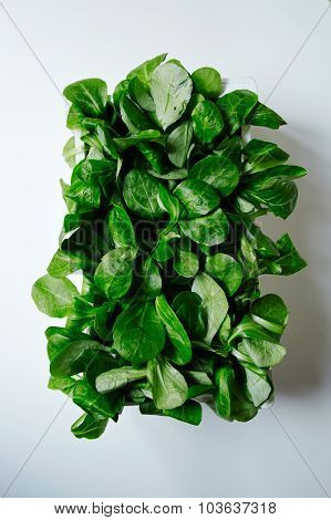 Watercress Salad In White Wooden Box Top View