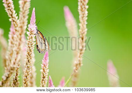 Orange Butterfly On Pink Flower