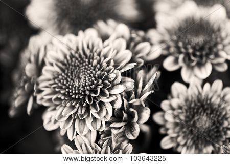 Petals of a beautiful flower on a black background in black and white