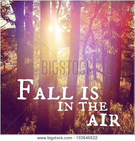 Inspirational Typographic Quote - Fall is in the Air
