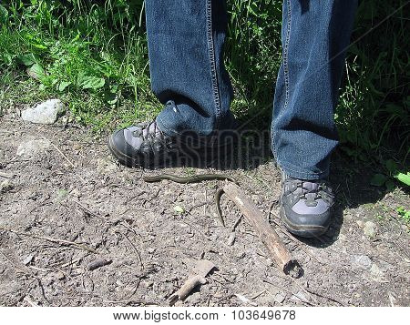 Legs, feet, trainers and jeans. Snake crawling near the shoe