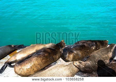 Sea lions in Santa Cruz, California