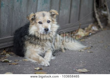 Portrait of cute country dog