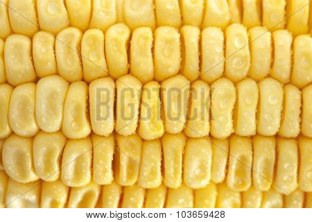 Fresh Corn Closeup