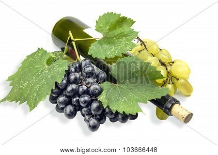 A Bottle Of Wine Under The Grape Leaves.