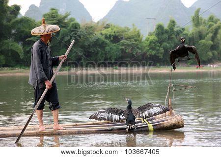 Chinese Man Fishing With Cormorants Birds In Yangshuo, Guangxi Region, T