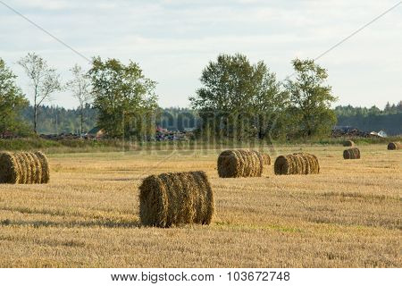 Bales On The Lawn