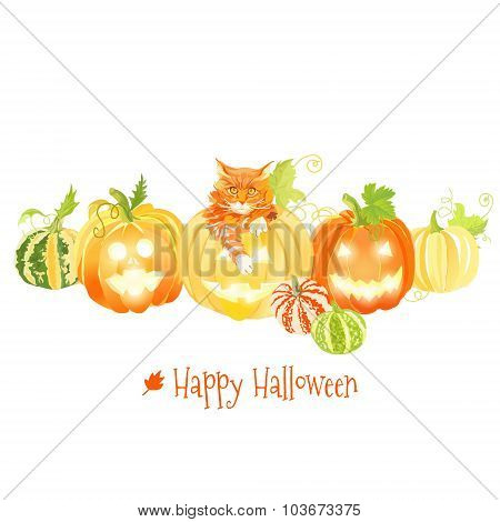 Cute Halloween Pumpkins And Red Cat Vector Design Objects