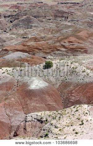 Colorful Painted Desert And Tenacious Vegetation