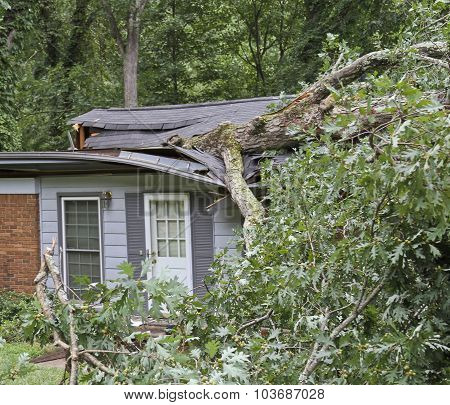 Storm Felled Tree Falls Totaling A Small House