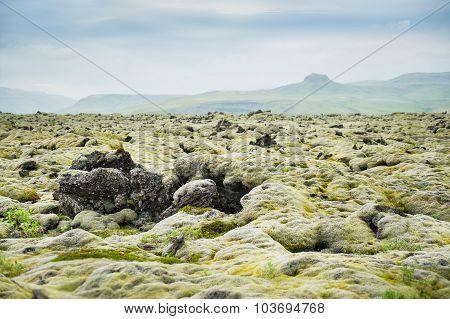 Green Moss On Volcanic Field, Iceland