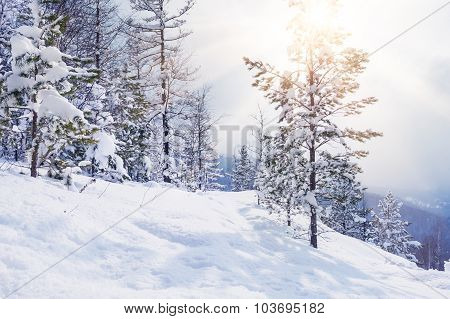 Snow-covered Trees In The Mountains At Sunset.