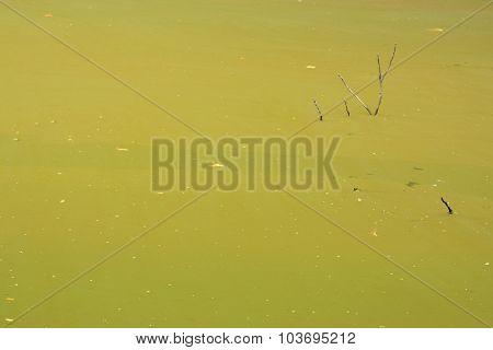 Swamp Texture