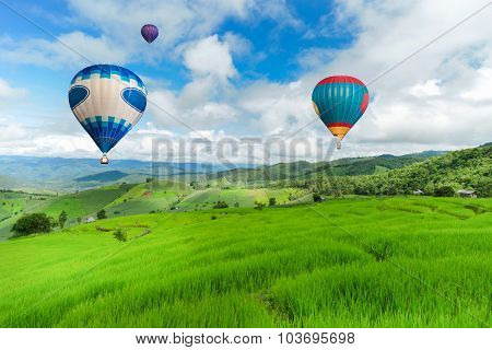 Balloon flying on rice field, Rice field in mountain or rice terrace in the nature