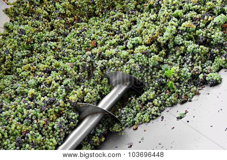 Industrial Grapes Processing