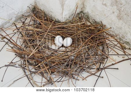 pigeon egg on dry straw nest