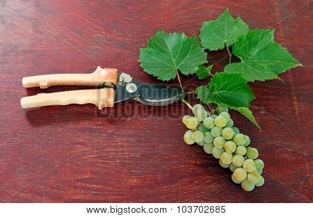 Grape With Scissors On Wooden Background