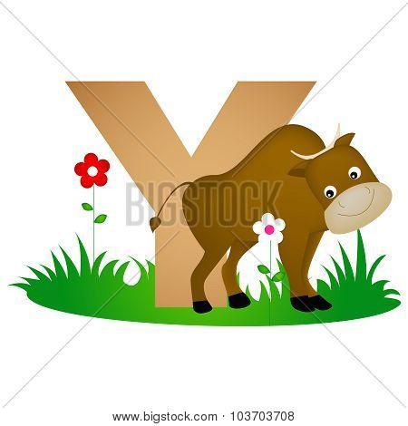 Animal Alphabet Letter Y
