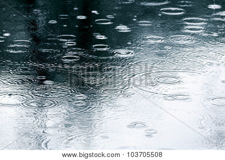 Wet Pavement With Trees Reflection