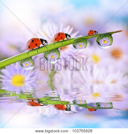 Flowers in the drops of dew on the green grass and ladybugs. Nature background.